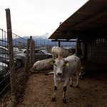 Agriturismo La Smiraglia의 사진