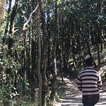 walk thru the forest