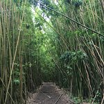A great hike through a bamboo forest