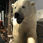 The Polar Bear Society Foto