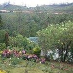Photo of Rose Gardens