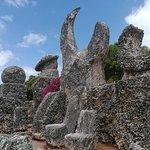 Coral Castleの写真