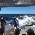 Bilde fra Auckland Whale & Dolphin Safari