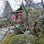 Photo de Kongorin-ji Temple