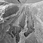 Giant non-animal lines