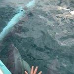 Foto di Polperro Dolphin Swimming