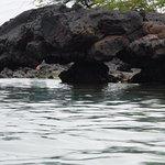 Bild från Kiholo Bay