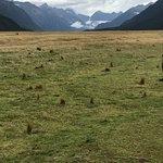 Fiordland National Park (Te Wahipounamu) Foto