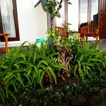porch and ferns at Aris Center Homestay, Munduk, Bali