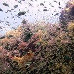Searobin Dive Center Foto