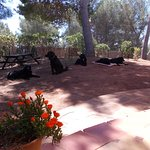 Dog Friendly Rental Villa, as even pets like to be on Holiday with you.