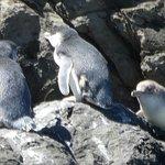 Billede af Pohatu Penguin Habitat