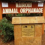 Nairobi animal orphanage