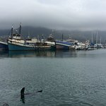 Playful Seals in the Harbour