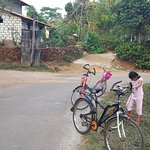 Cycling through the empty roads of coffee estate