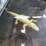Huge albino gator...even bigger one outside