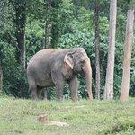 Elephant Hills – fénykép