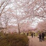 Foto de Centennial Park