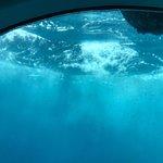 Photo of Atlantis Submarines Barbados
