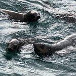 Wildlife Coast Cruises 사진