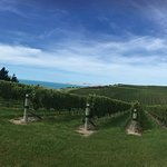 Over the vines