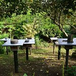 Stingless Bee Hives