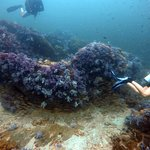 Photo de Forra Diving - Day Tour