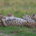 Northern Tuli Game Reserve wild animals