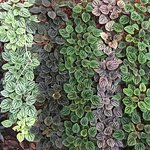Linear ground covers