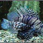 Photo of Hurghada Grand Aquarium