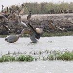 Photo of Djoudj National Bird Sanctuary