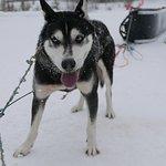 Photo de Howling Dog Tours