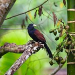 bird endemic