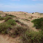 More about the dunes