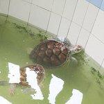 Photo of Cherating Turtle Sanctuary