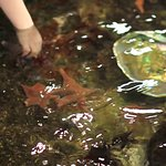 Tide Pool - Hands On