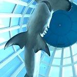 Hammerhead Shark Display