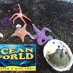 Tide Pool - Live Sea Creatures