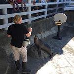 Live Sea Lion and Seal Tour-show