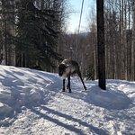 Running Reindeer Ranch Foto