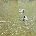Plenty of swans, ducks, geese, ibis
