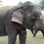 Photo of ElephantsWorld
