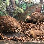 Photo de Otorohanga Kiwi House & Native Bird Park