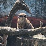 Photo of Szeged Zoo