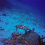 Фотография Palm Beach Divers