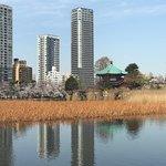 Ueno Park – fénykép