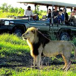 Game Viewing at Tau Game Lodge