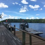 Foto de Jungle Erv's Everglades Airboat Tours