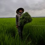 this woman was beyond gracious and regal allowing us to photograph her in the rice paddy