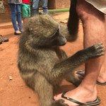 Foto de Bambelela Wildlife Care&Vervet Monkey Rehabilitation Farm